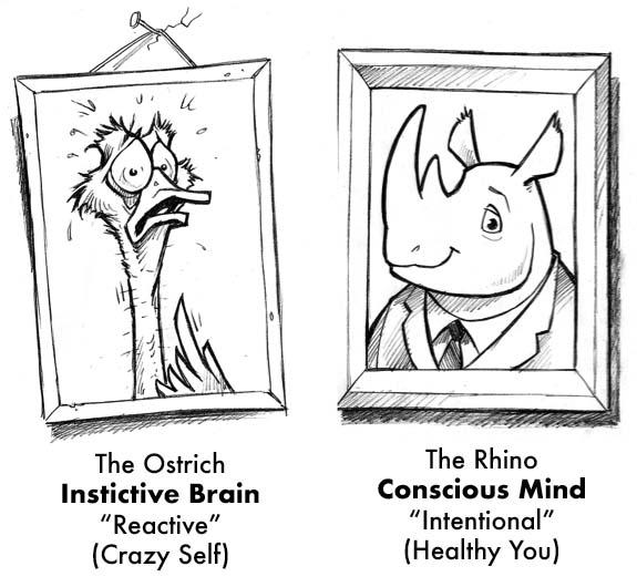 ostrich-vs-rhino